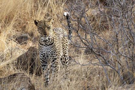 Transtrek Safaris - East African Safaris